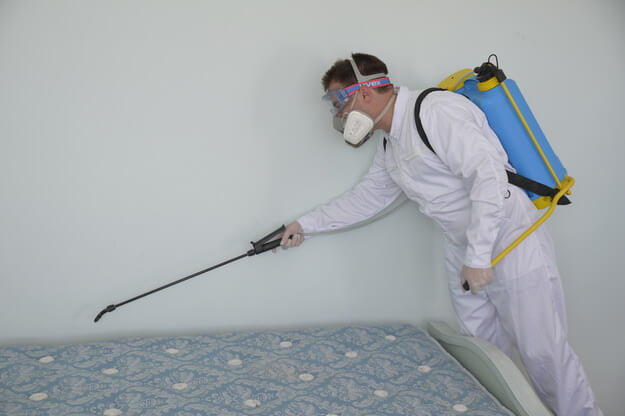 Custom Pest Control And Extermination Solutions In Des Plaines IL