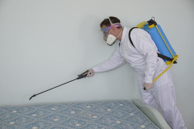 Bed Bugs Extermination Des Plaines IL